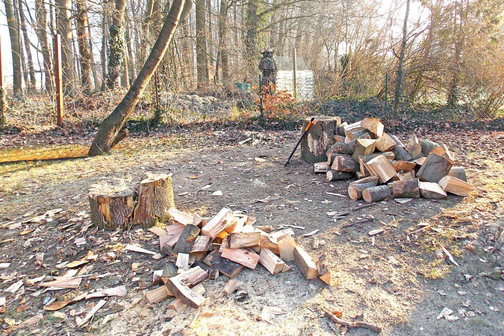 Brennholzproduktion im Haus Landwehr in Lüneburg